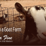 city-girl-on-a-goat-farm-marcia-fine